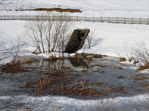水ぬるむ池