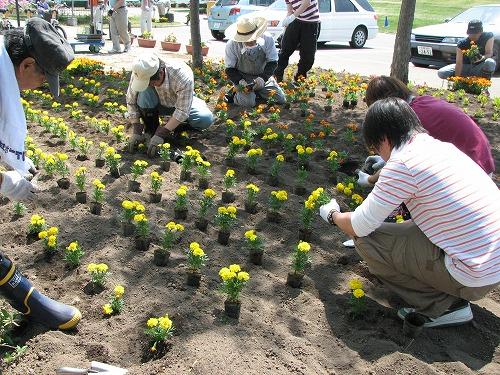 公園花壇花植え